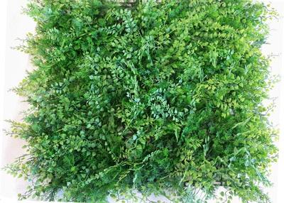 διακοσμητικος φραχτης φτερη κισσος Grass Experts