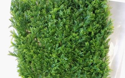 Φυλλωσιά φτέρη 50x50 φράχτης Grass Experts